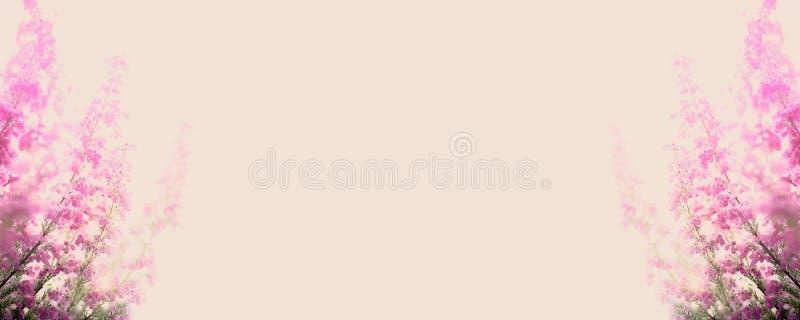 Erica zimy wrzosowiska gracilis rama obrazy stock