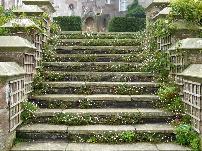 Erigeron karvinskianus flowering on stately home steps. Erigeron karvinskianus tiny delicate pink and white daisy flowers cascading down steps to create floral stock image