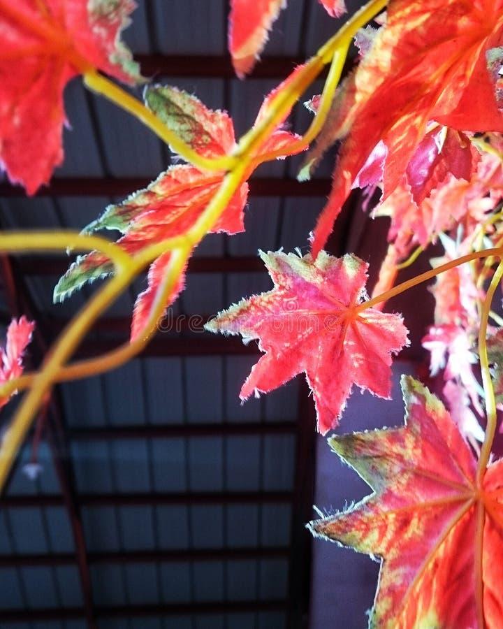 Erinnert mich an Herbst stockfotos