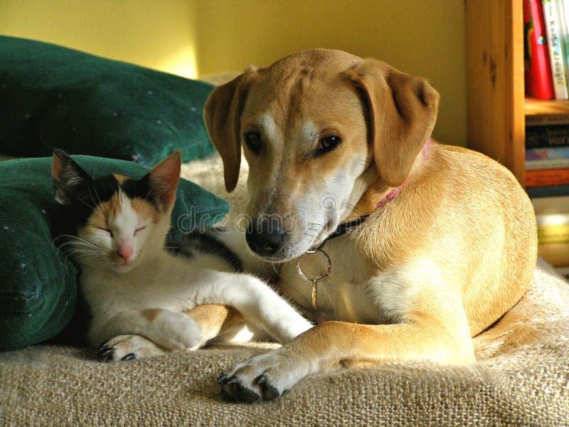 Eris e Dafne, animali domestici adorabili immagine stock