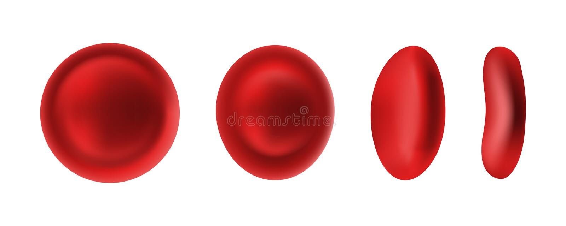 Eritrócite ou glóbulos vermelhos isolado no branco ilustração do vetor