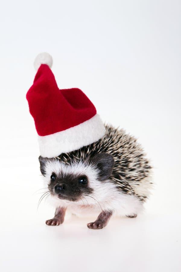 Erizo de la Navidad fotografía de archivo libre de regalías
