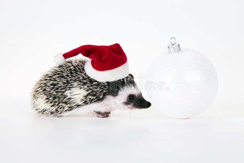 Erizo de la Navidad imagen de archivo libre de regalías