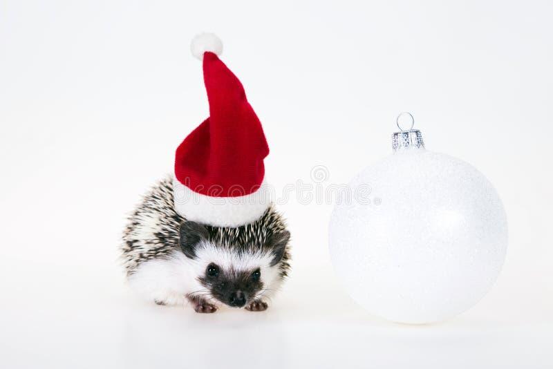 Erizo de la Navidad foto de archivo libre de regalías