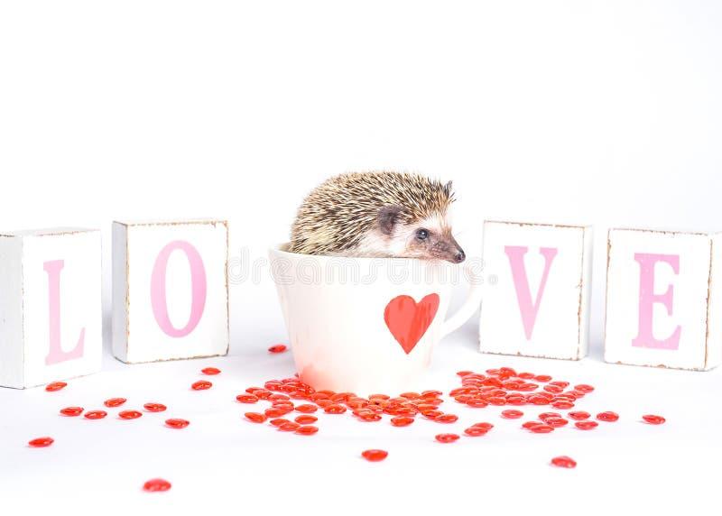 Erizo en taza del corazón foto de archivo libre de regalías