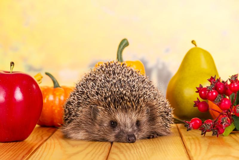 Erizo gris espinoso que se sienta en la tabla, al lado de bayas, de verduras y de frutas imágenes de archivo libres de regalías
