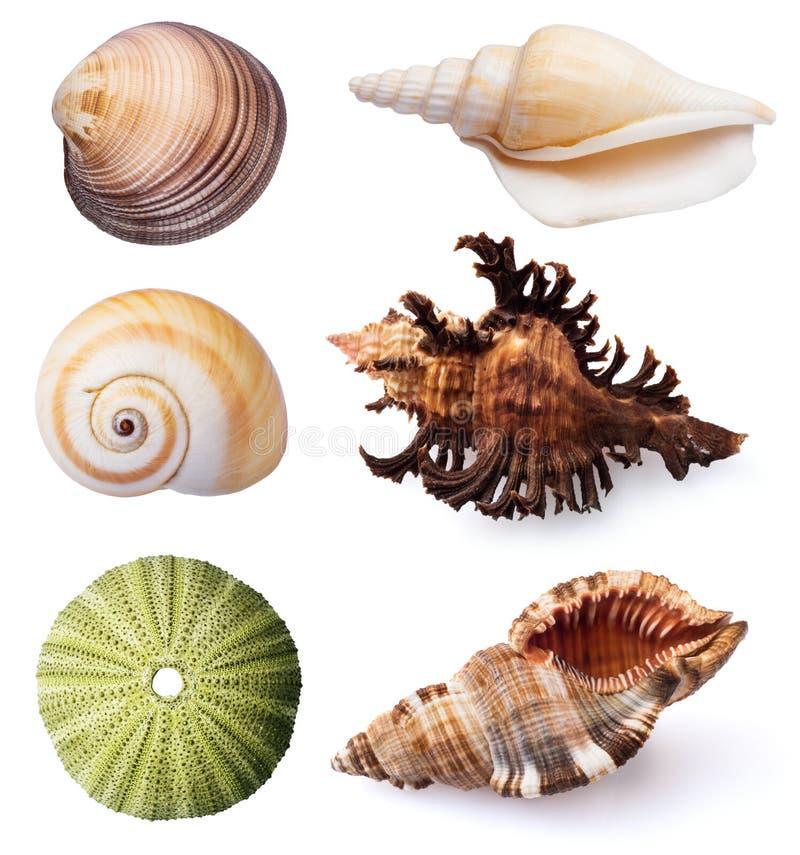 Erizos de mar y cáscaras en el fondo blanco imagen de archivo