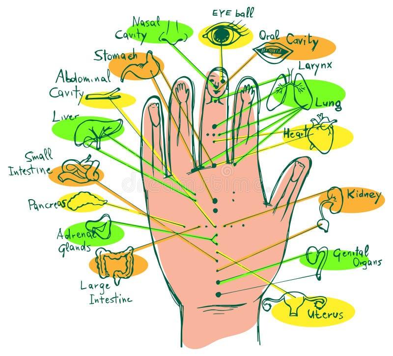 Erläutertes Reflexzonenmassage-Handdiagramm Vektor Abbildung ...