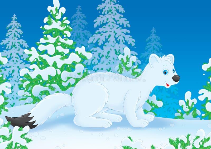 Download Ermine stock illustration. Illustration of illustration - 28305953