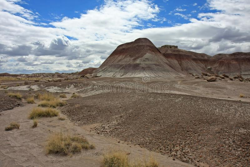Ermo do deserto pintado em Forest National Park hirto de medo, o Arizona imagens de stock