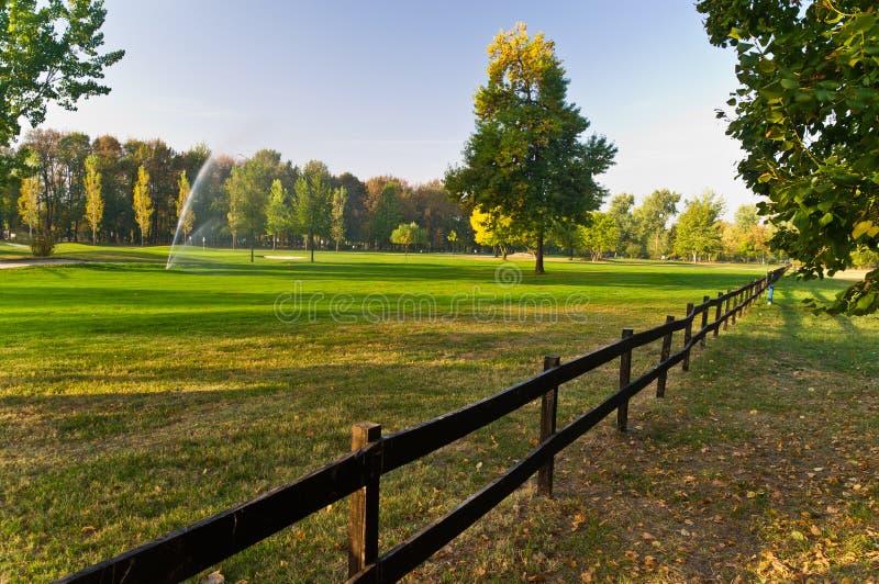 Erneuerngras auf einem Golfplatz lizenzfreie stockbilder