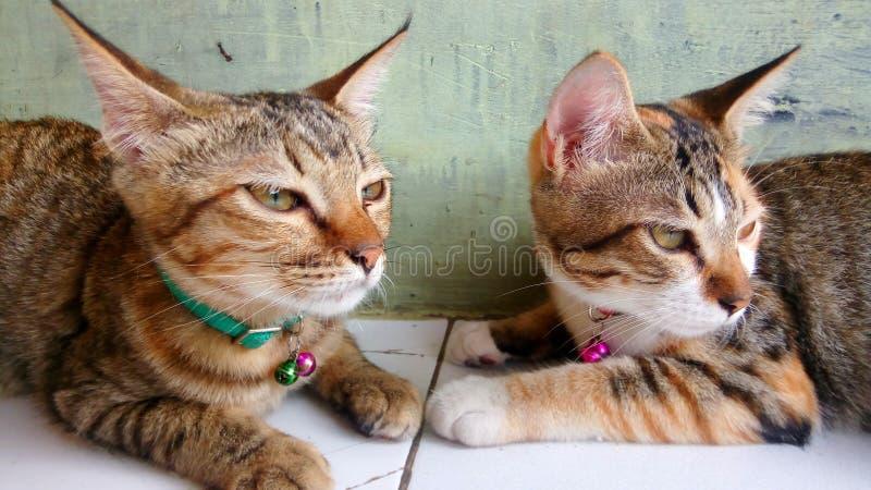 Ernste Katze lizenzfreie stockfotografie