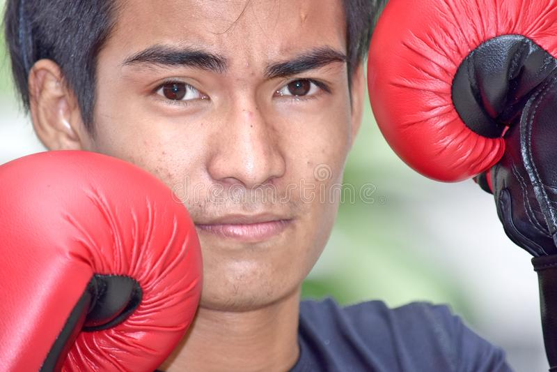 Ernste männliche Athleten-Boxer Wearing Boxing-Handschuhe stockbild