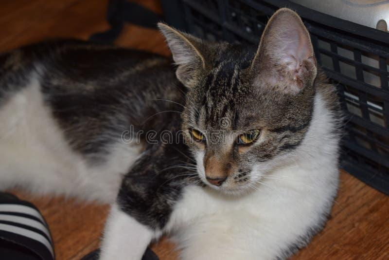 Ernstige kat royalty-vrije stock foto