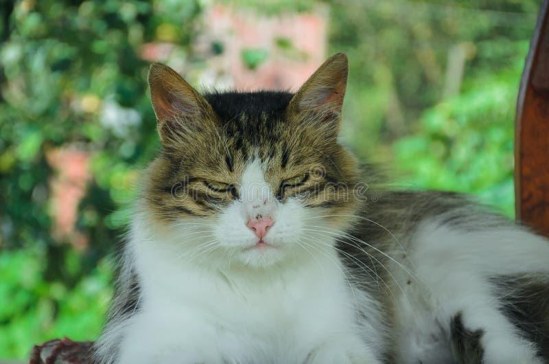 Ernstige kat Streng kijk royalty-vrije stock foto