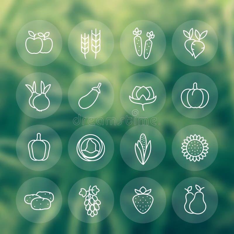 Ernte, Gemüse, Linie Ikonen bewirtschaftend eingestellt vektor abbildung