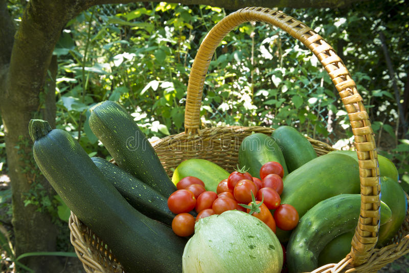 Ernte im Gemüsegarten stockbilder