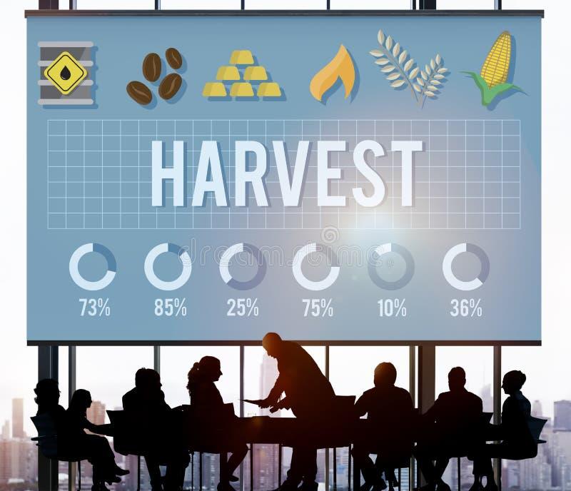 Ernte-Landwirtschafts-Landwirt-Natural Nature Ripe-Konzept lizenzfreie stockfotos