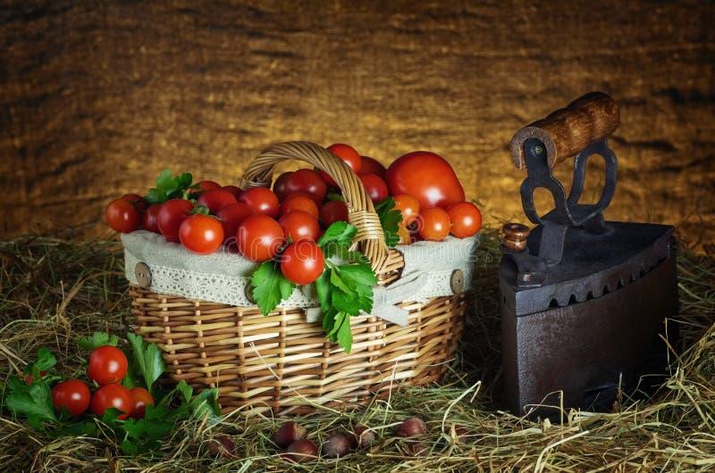 Ernte von Cherry Tomatoes stockbilder