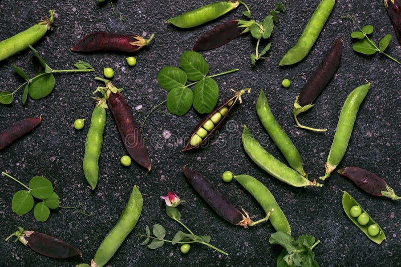 Ernte von organischen grünen und purpurroten Erbsenhülsen stockfotos