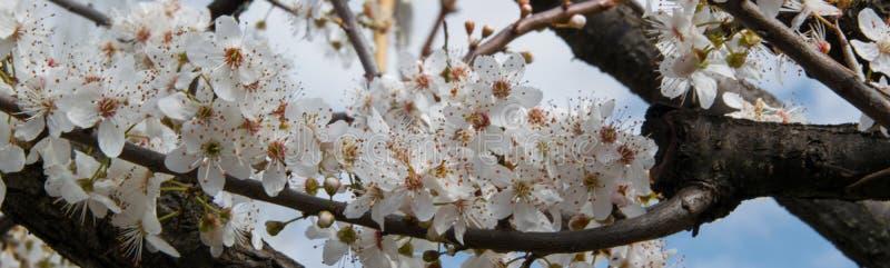 Ernteansicht des Blütenbaums, landwirtschaftliches saisonalkonzept stockfotografie