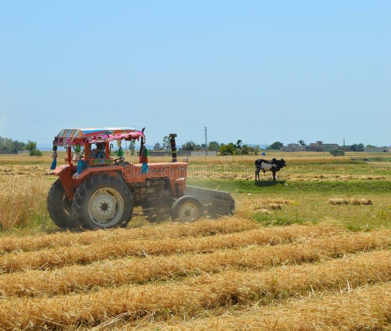 Erntemaschine ist auf dem Weizengebiet beschäftigt lizenzfreies stockbild