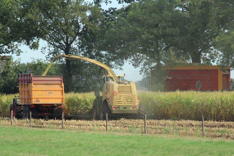 Ernten von Mais stockfotografie