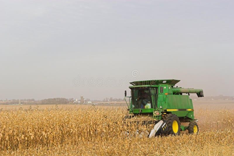 Ernten von Mais lizenzfreies stockfoto