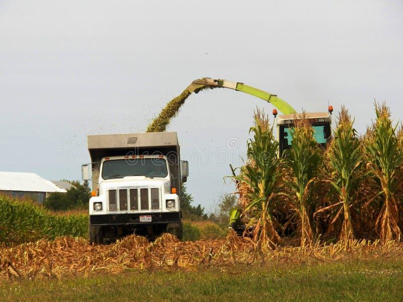 Ernten von Mais stockbilder
