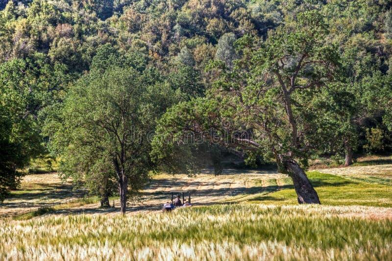 Ernten in zentralem Kalifornien lizenzfreie stockbilder