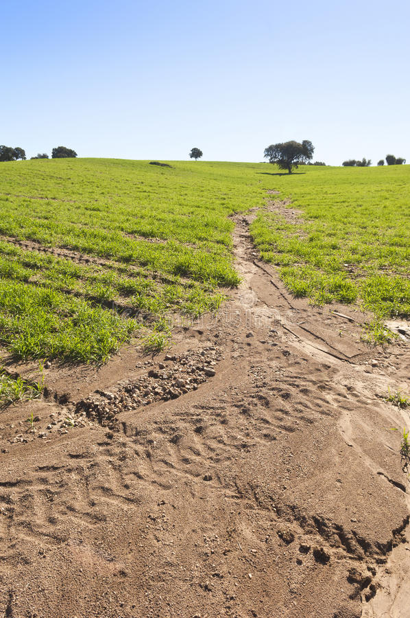 Download Eroded field stock image. Image of cereals, crops, rowing - 28531349