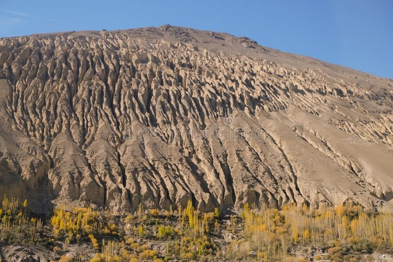 An eroded mountain with yellow leaves poplar trees. An eroded mountain with yellow leaves poplar trees in autumn. Gilgit Baltistan, Pakistan royalty free stock images