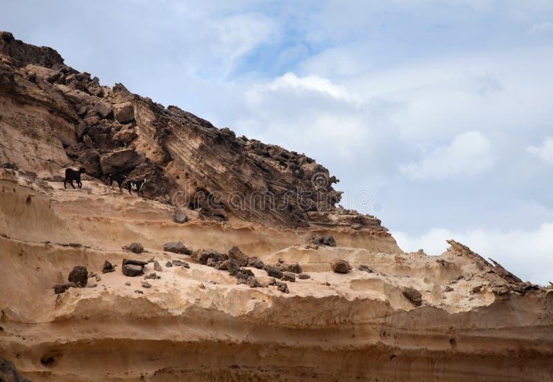 Eroderad västkusten av Fuerteventura fotografering för bildbyråer