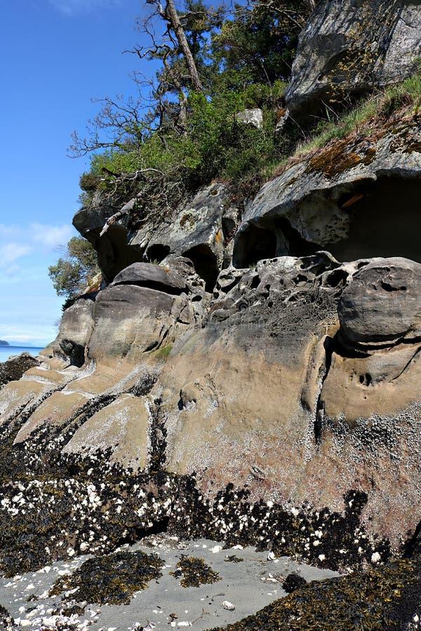 Eroderade sandstenklippor på shorelinen av Stilla havet royaltyfri foto