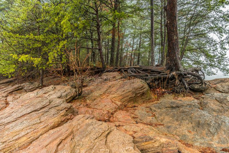 Erosão da linha costeira no lago foto de stock royalty free