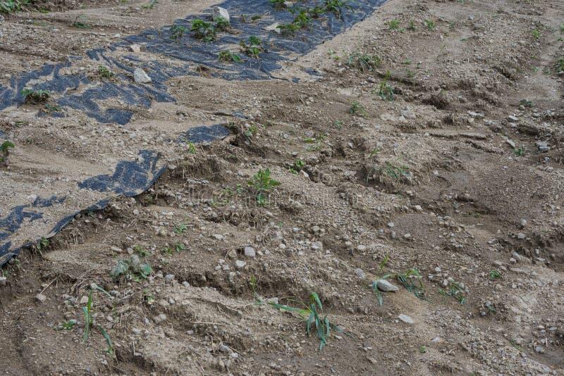 Erosión de suelo en un campo imágenes de archivo libres de regalías