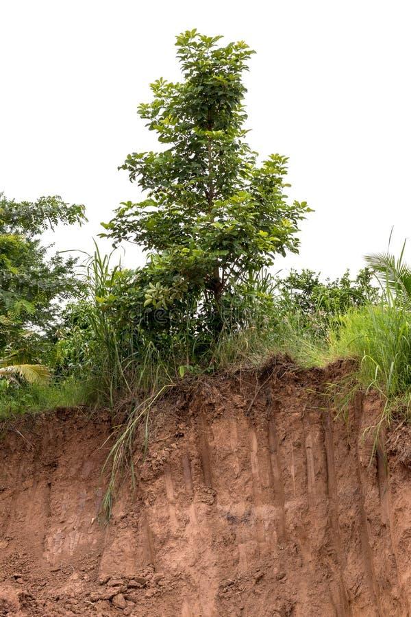 Erosión de suelo y excavación debajo del árbol imagenes de archivo