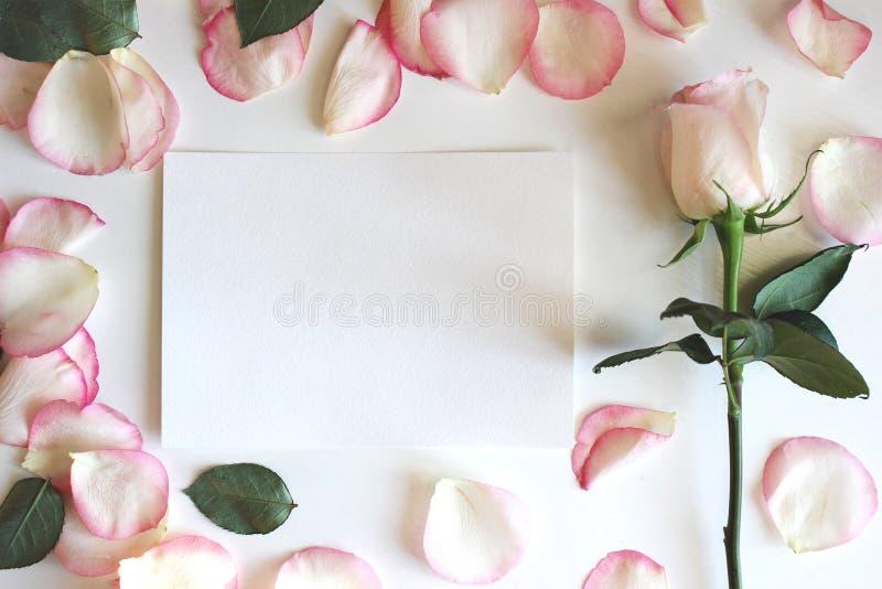 Erröten rosa Rose und Blumenblätter Horizontales Modell des leeren Papiers Heirat, romantische Schablone Hintergrund, flache Lage stockbilder
