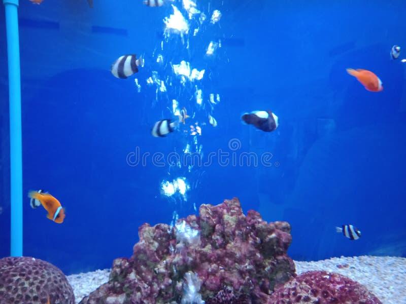 Errichtung von Fischen, damit Schönheit für immer 1 ist lizenzfreie stockfotos