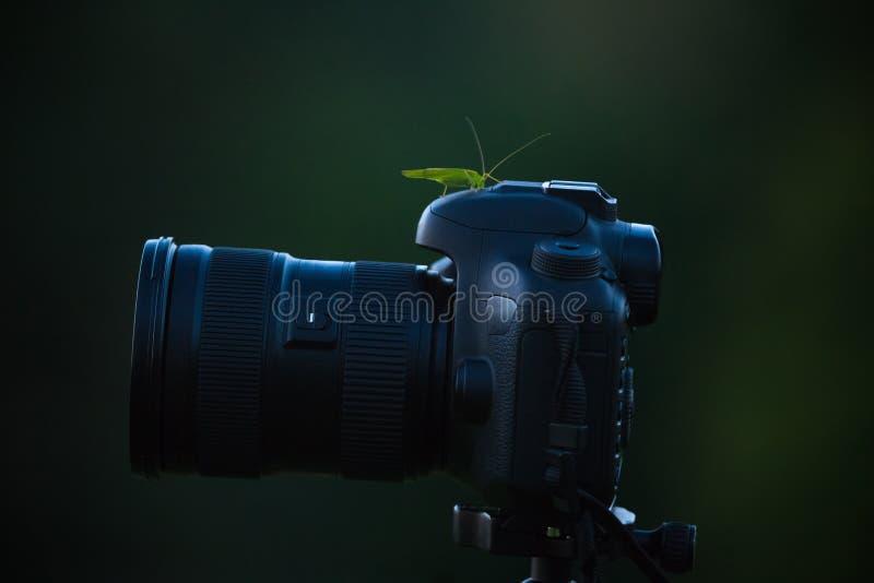 Erro verde do gafanhoto no corpo da câmera isolado no fundo escuro fotografia de stock