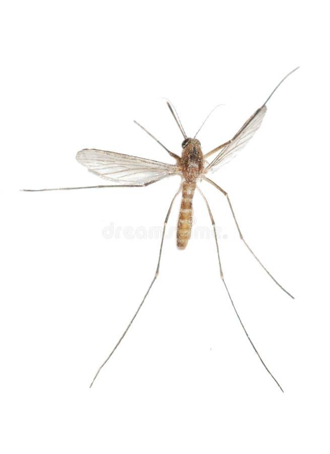 Errore di programma della zanzara fotografia stock libera da diritti