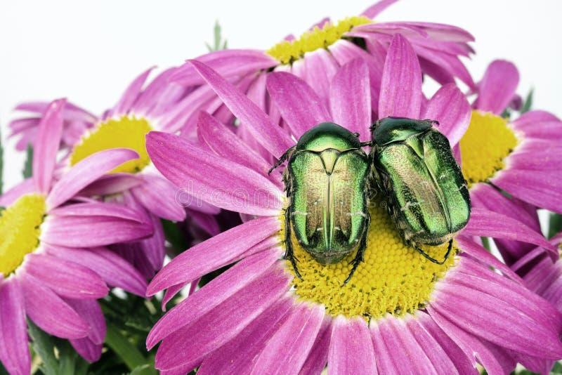 Errori di programma verdi Enamoured fotografia stock libera da diritti