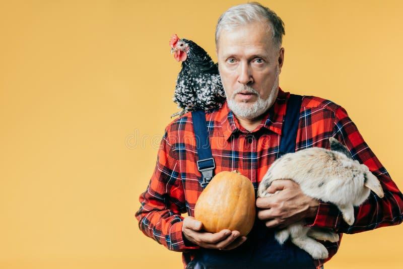 Erschrockener alter Mann mit einer Henne auf seiner Schulter hält ein Kaninchen und einen Kürbis stockfotografie