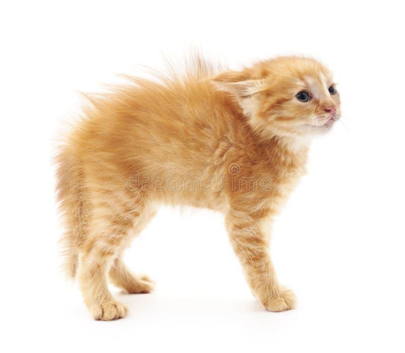Erschrockenes kleines Kätzchen stockfotografie