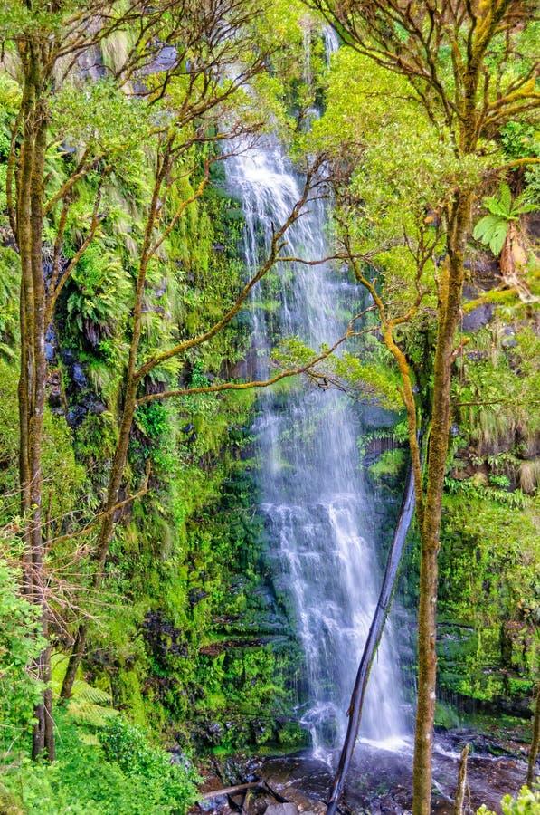 Erskine Falls - Lorne stockbilder