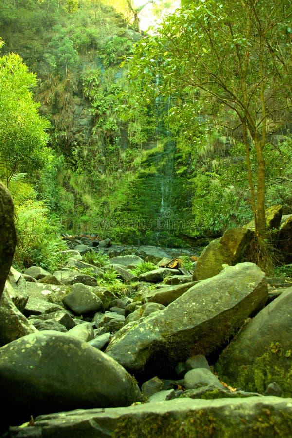 Erskine Falls Waterfall royalty free stock photography