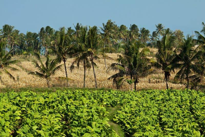 Erstaunliche Ansicht der agrar Kultur in Lombok, Indonesien stockfotos