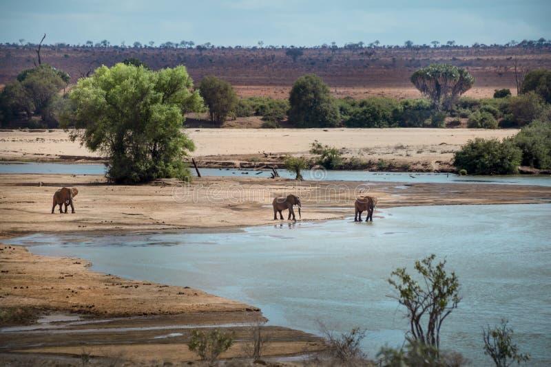 Erstaunliche Ansicht Savannah Parks in Kenia lizenzfreies stockfoto