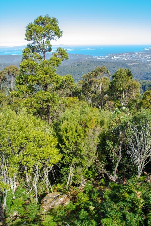 Erstaunliche Ansicht von Tiefländern durch Gebirgswald, Berg Wellington, Tasmanien lizenzfreie stockbilder