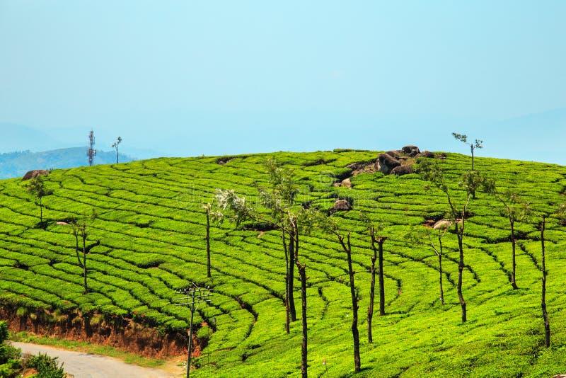 Download Erstaunliche Ansichten Von Teeplantagen In Munnar Stockfoto - Bild von idyllisch, bauernhof: 90236990